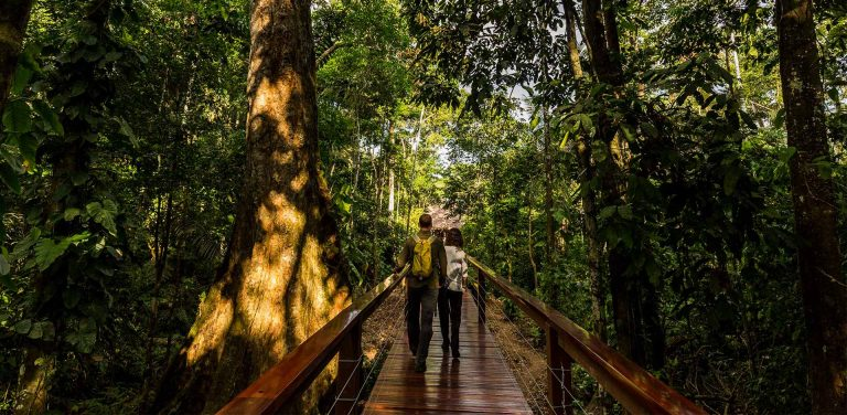 Walking along the trails of a Tambopata amazon lodge