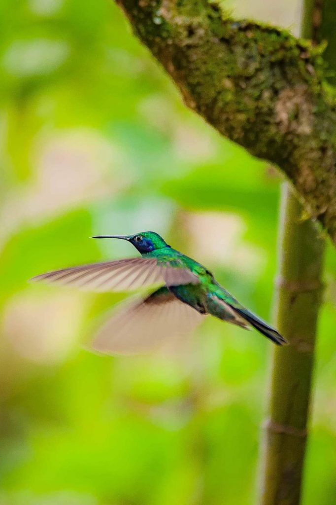 A hummingbird flying around Lola and Perico's house in Amazonas