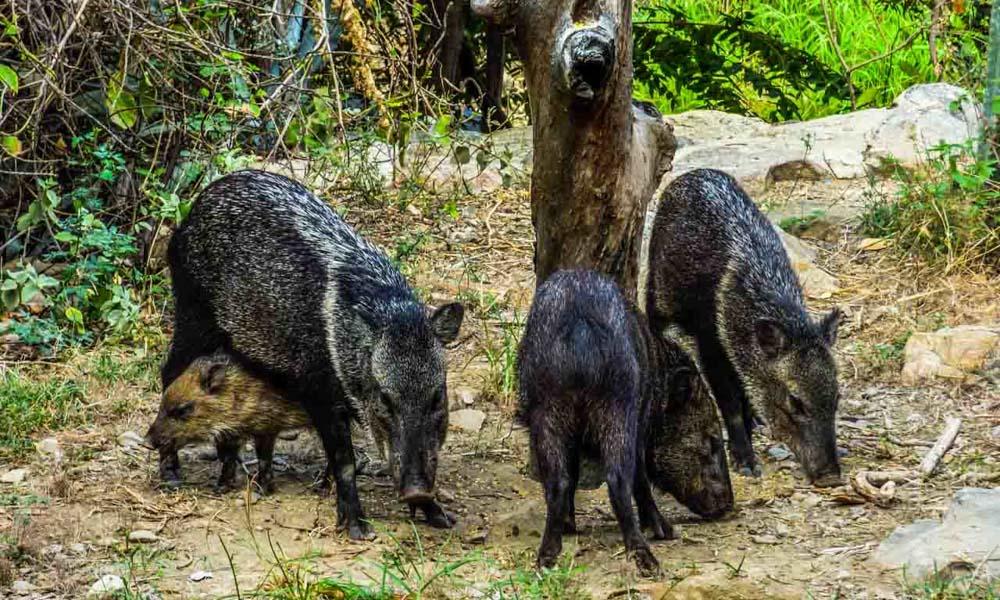 chaparri ecological reserve peru peruvian soul