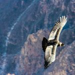 E bike peru andean condor