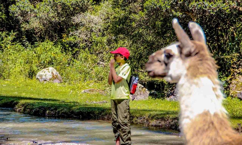 Family trip to peru llama trek
