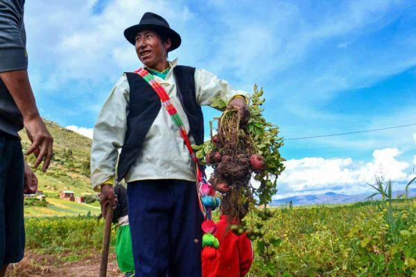 Luquina Peru Lake Titicaca Islands