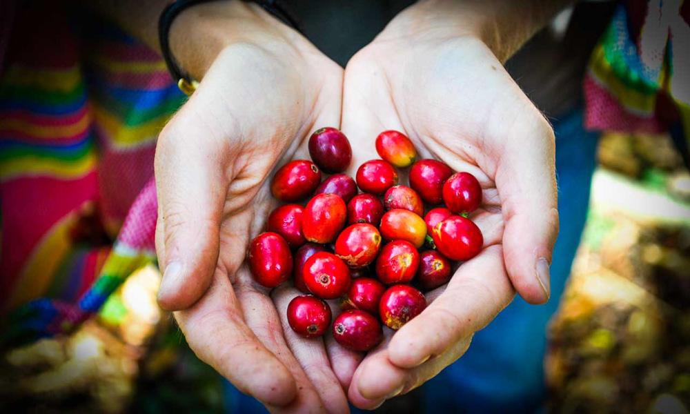 Machu Picchu peruvian Coffee bean