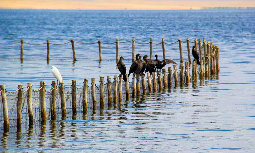 Paracas National Reserve Tour