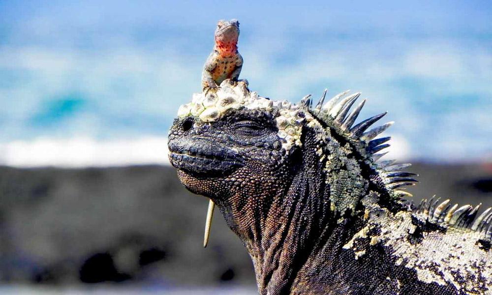 Peru and Galapagos Holidays