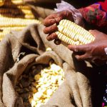 Peru food tours Peruvian Soul