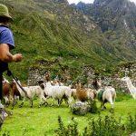 Sacred Valley Llama Trekking