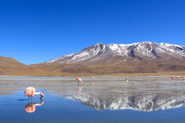 A beautiful flamingo in the Red Lake, Bolivia