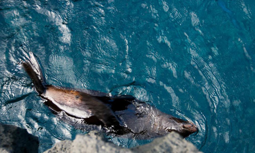 Wildlife Galapagos Islands