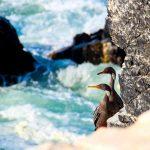 Wildlife tours in Peru Illescas peru