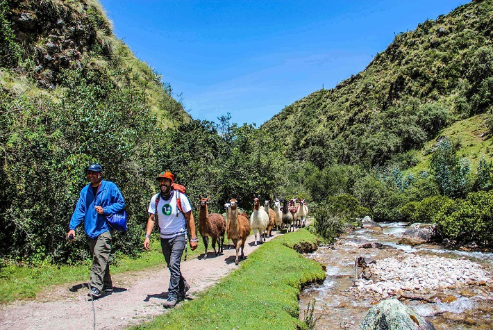 Llamas Peru with Kids