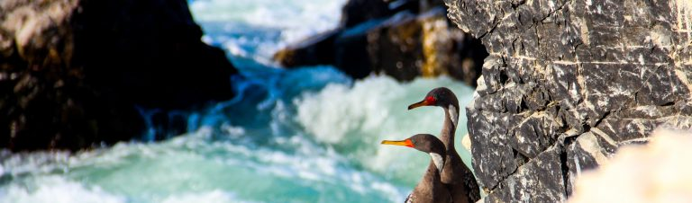 Nature Expeditions in Peru: Illescas