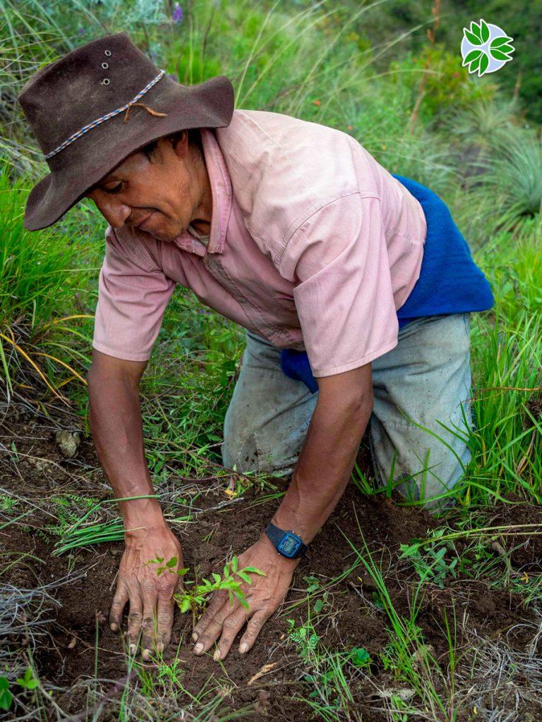 Reforestation with Pachamama Raymi