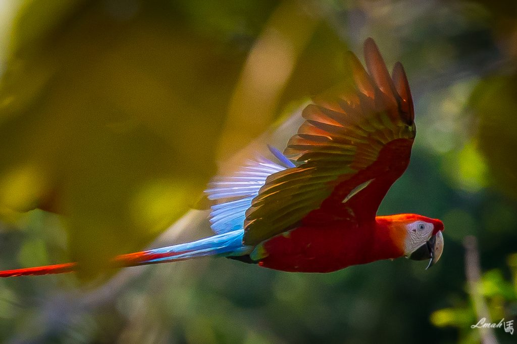 Macaw project, Tambopata National Reserve