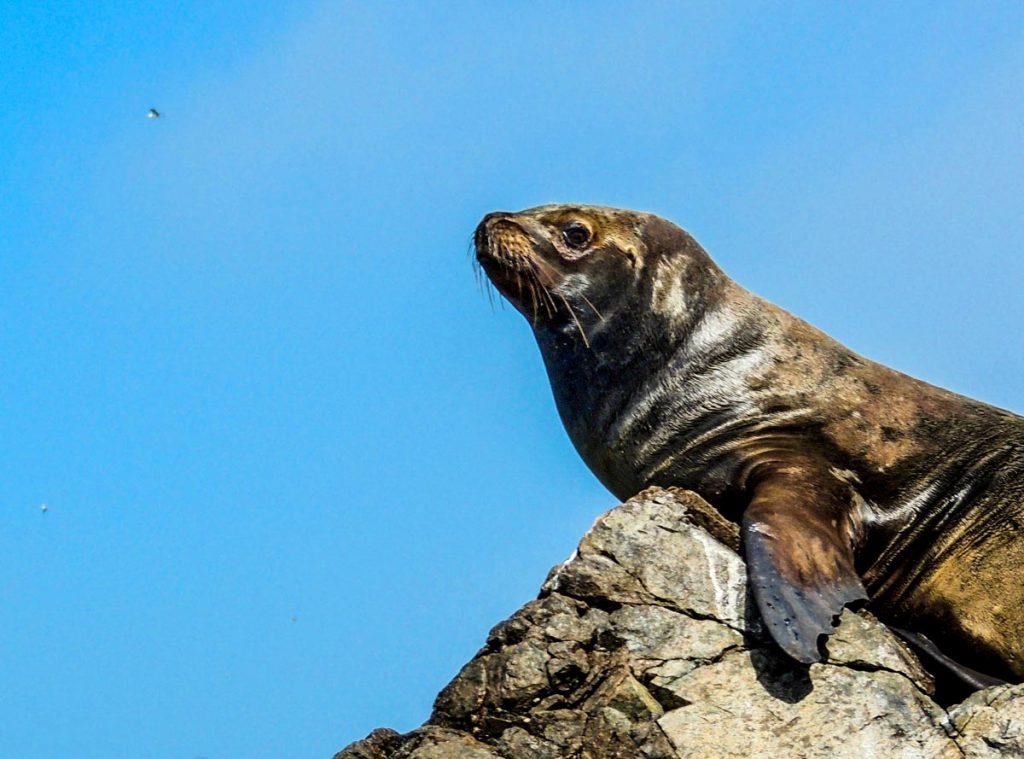 Paracas National Reserve - Top 5 National Parks in Peru